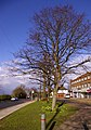 Lime Trees, Bramley Parade, London N14 - geograph.org.uk - 735276.jpg