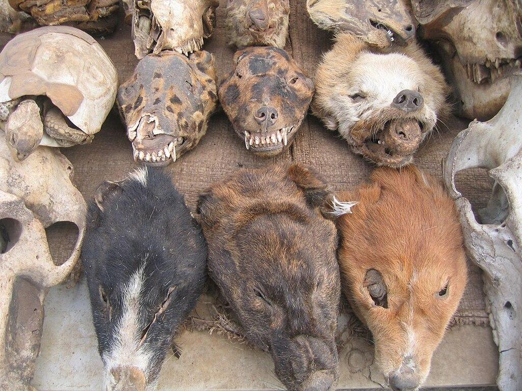 Voodoo Dogs Food Truck