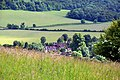 Looking across Turville from Turville Hill - geograph.org.uk - 1343888.jpg