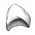 Lunate bone (left hand) 09 distal ulnar view.png