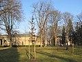Luthereiche auf dem Neuen Annenfriedhof Winter (3).jpg