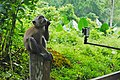 MacRitchie Nature Trail, Singapore; December 2014 (01).jpg