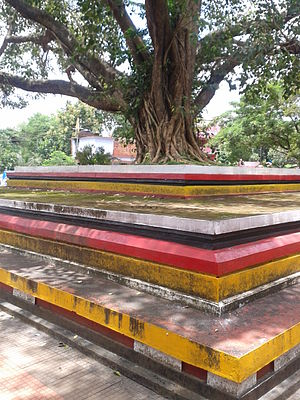 Madayi Kavu - The Arayal Thara in front of Tiruvarkad Bhagavathy Temple (Madayi Kavu). Arayal in Malayalam is synonymous to Bodhi Tree or Pippallam