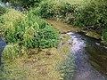 Mallard, River Avon - geograph.org.uk - 864042.jpg