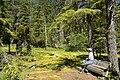 Man at Imnaha Springs, Rogue River Siskiyou National Forest (23907844386).jpg