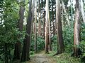 Matsue Castle in Japan, Forest stroll1 松江城.jpg