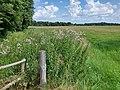 Meadows, Hartmannsdorf (2).jpg
