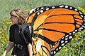 Monarch (6124073099).jpg
