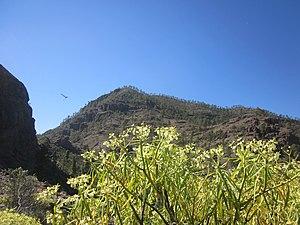 Montaña de Tauro I..JPG