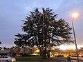 Monterey Park, CA, USA - panoramio (244).jpg