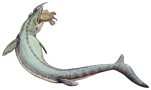 Mosasaurus qui Chasse