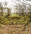 Moss on Drystone Wall. - panoramio.jpg