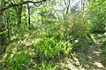 Mote Hill site, Cumnock, East Ayrshire, Scotland.jpg