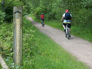 Trail riding - Mountain bike trail in the Forest of Dean, England.