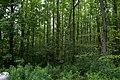 Mountsberg (3680636211).jpg
