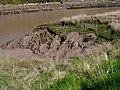 Mud, mud, glorious mud - geograph.org.uk - 395557.jpg