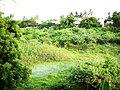 My Backyard - panoramio.jpg