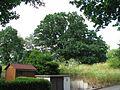 ND 611.007, Stieleiche, 5, Wolfsanger-Hasenhecke, Kassel.jpg