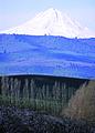 NRCSOR02010 - Oregon (5869)(NRCS Photo Gallery).jpg