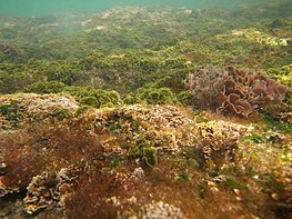 A variety of algae growing on the sea bed in shallow waters