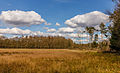 Nationaal Park Drents-Friese Wold. Locatie Dieverzand. Bosrand 02.jpg