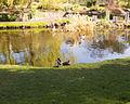National Botanic Gardens, Dublin (6872752264).jpg