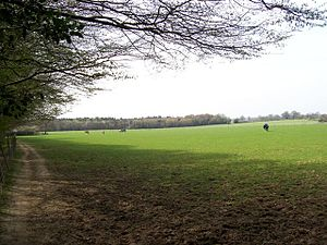 Walter of Bibbesworth - Fields near Bibbsworth Hall, Hertfordshire