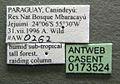 Neivamyrmex goeldii casent0173524 label 1.jpg
