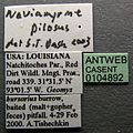 Neivamyrmex pilosus casent0104892 label 1.jpg