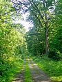 Nerville-la-Forêt (95), route du Tourniquet de Montsoult.jpg