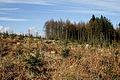 New planting in Dalmacallan Forest - geograph.org.uk - 1731453.jpg