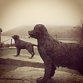 Newfoundland and Labrador dog statues in St. John's Harbourside Park, created by Luben Boykov in 2002.jpg