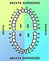 Numerazione dentaria.jpg