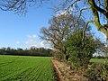 Oak lined hedgerows - geograph.org.uk - 10527.jpg