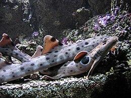 Océanopolis - les aquariums 009.JPG