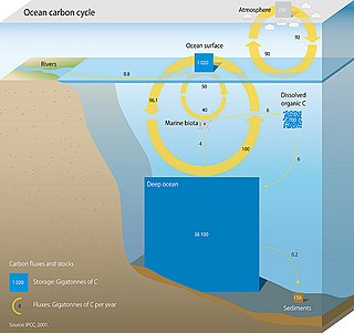 Oceanic carbon cycle Processes that exchange carbon between various pools within the ocean and the atmosphere, Earth interior, and the seafloor.