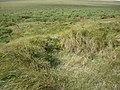 Old dune damage - geograph.org.uk - 562465.jpg