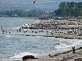 Olimpyc beach - panoramio.jpg