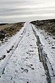 On the Duchess's Drive - geograph.org.uk - 1134661.jpg