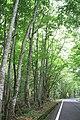 Onogawa, Showa, Onuma District, Fukushima Prefecture 968-0211, Japan - panoramio.jpg