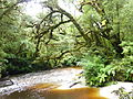 Oparara Basin the River from the footbridge Upstream 2.JPG