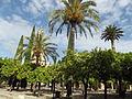 Orange Tree Courtyard (14602930358).jpg