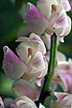 Orchid (8680404394).jpg