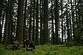 Oregon BLM Forestry 03 (6871710909).jpg