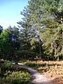 Ormoy-Villers (60), sentier de découverte du bois du Roi.jpg
