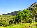 Orta kayadan kozağaç taşı - panoramio (1).jpg