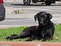 Otro perro callejero mas (9551394238).jpg
