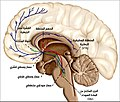 Overview of reward structures in the human brain ar.jpg