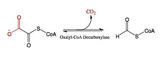 Oxalyl-CoA decarboxylase - Image: Oxalyl Co A Substrate