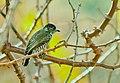 Pássaros (19110233).jpeg